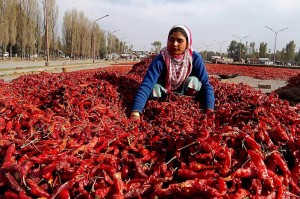 chili lansdowne gananoque humane society